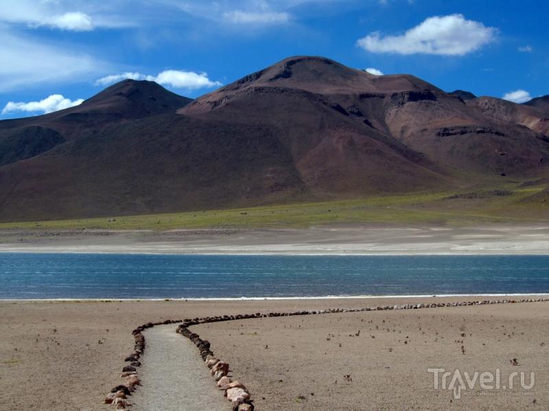 Высокогорные лагуны, солончак, фламинго и тропик Козерога / Чили