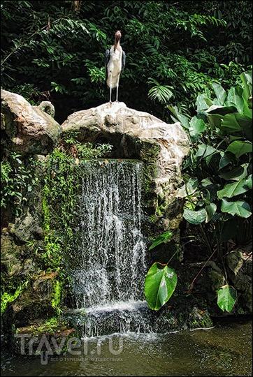 Прогулки по Сингапуру: парк птиц / Сингапур