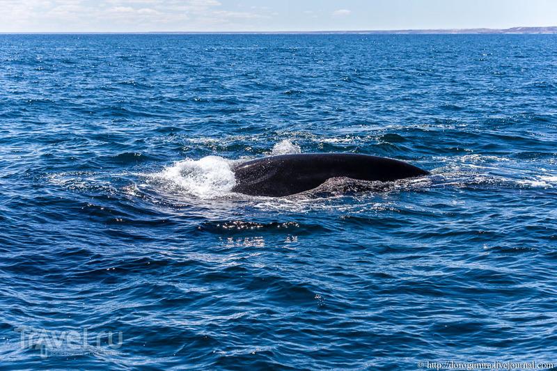 Как мы искали китов / Аргентина