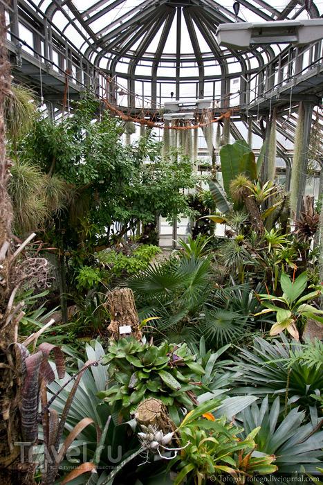 Берлин. Ботанический сад и Николаевский квартал / Фото из Германии