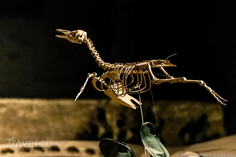 Патагонские динозавры / Аргентина