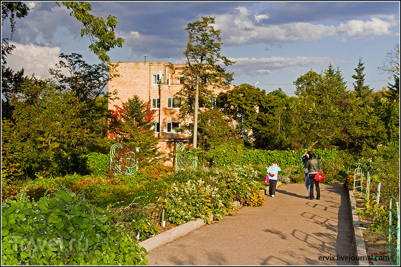 Ботанический сад Владивостока / Фото из России