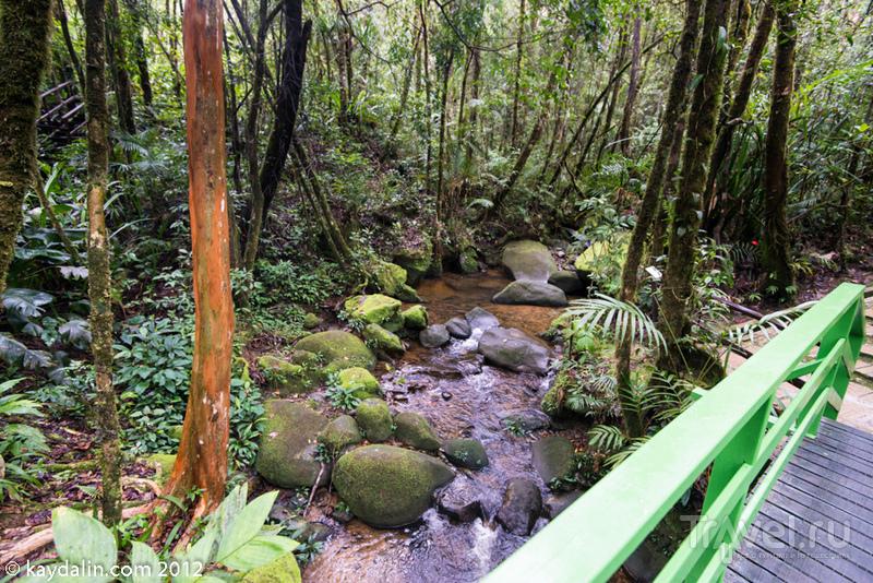 Малайзия. Национальный парк Кинабалу / Малайзия