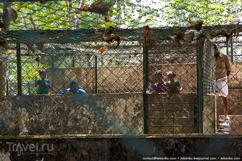 Индия. Керала. Коллам, Нейяр Дам, индийские заправки и ферма крокодилов / Индия
