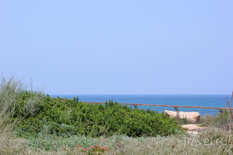 Прогулка вдоль моря / Израиль