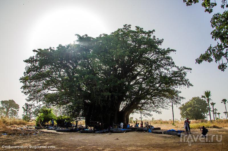 Сенегал. Пальмовый сад. Заключение / Фото из Сенегала