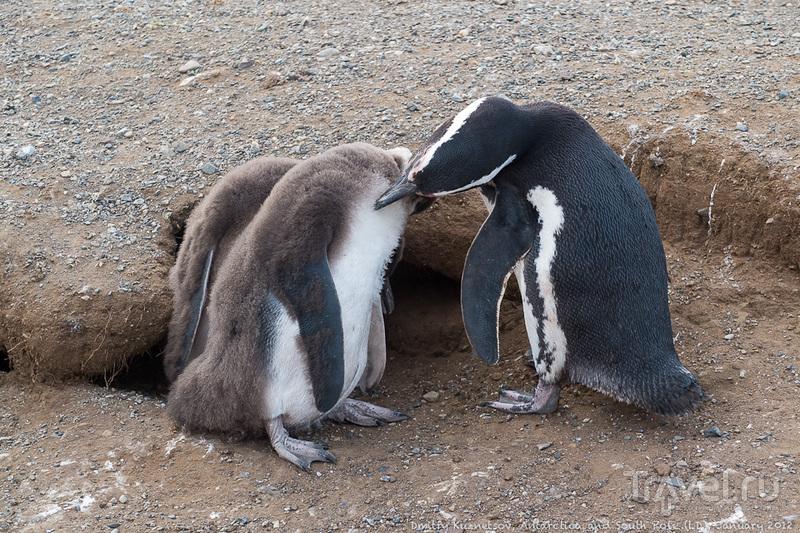 Антарктический дневник - на Большую Землю, про пингвинов, Сантьяго, эпилог / Антарктика