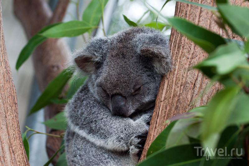 Австралия. Сиднейский зоопарк / Австралия