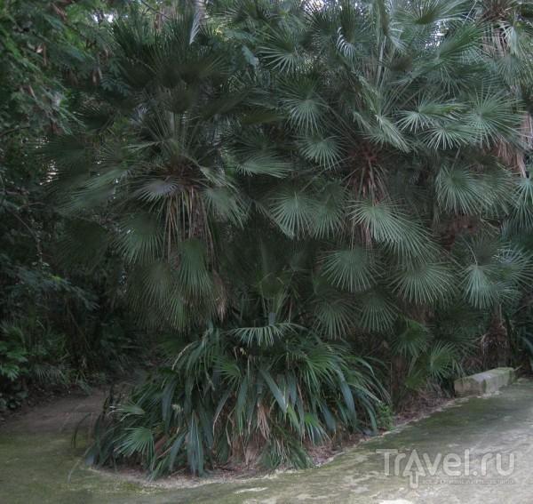 Jardin d'essai du Hamma (Жардан д'эссе), Алжир / Алжир