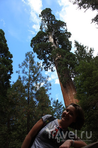 Fear and Loathing in Sequoia Park / США