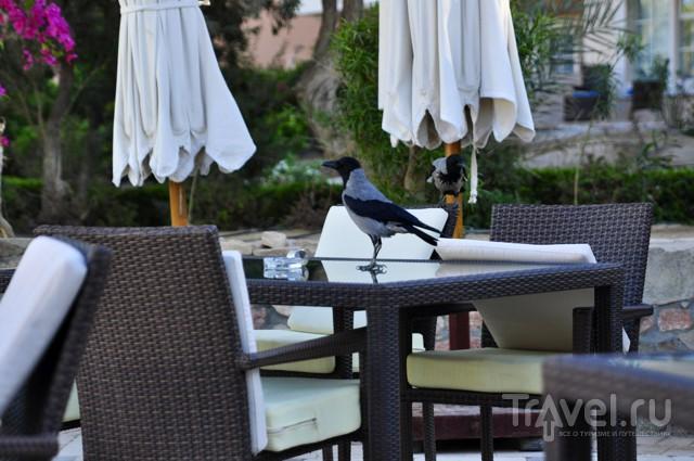 Отель Movenpick El Gouna. Swiss quality. Другой Египет / Египет