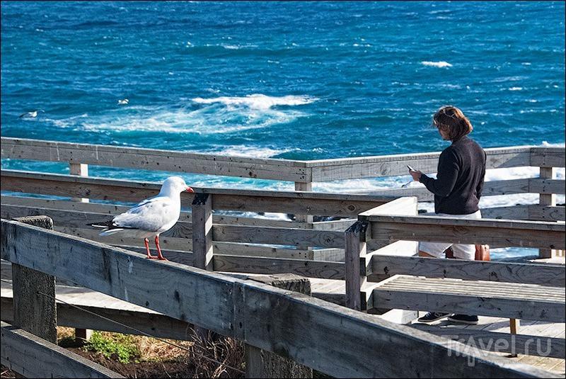 Остров Филлипа: чайки, кенгуру и все-все-все / Австралия