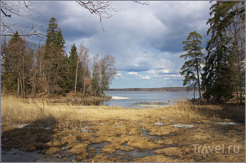 Берег Финского залива / Фото из России
