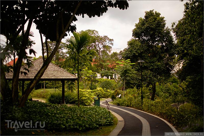 Сингапурский ботанический сад / Фото из Сингапура
