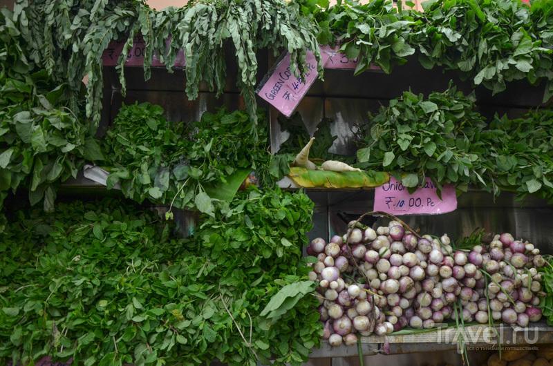 Зелень / Фото из Индии