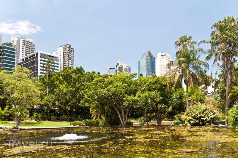 Ботанический сад в Брисбене / Фото из Австралии