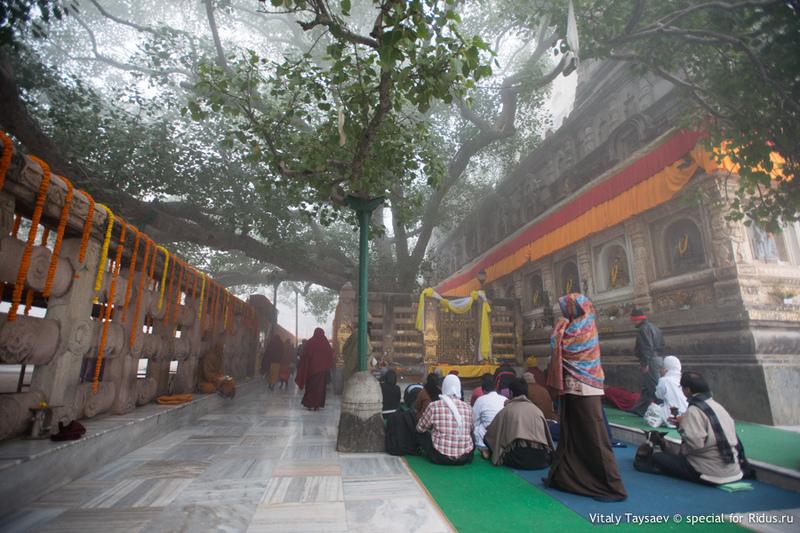 Дерево Бодхи / Фото из Индии