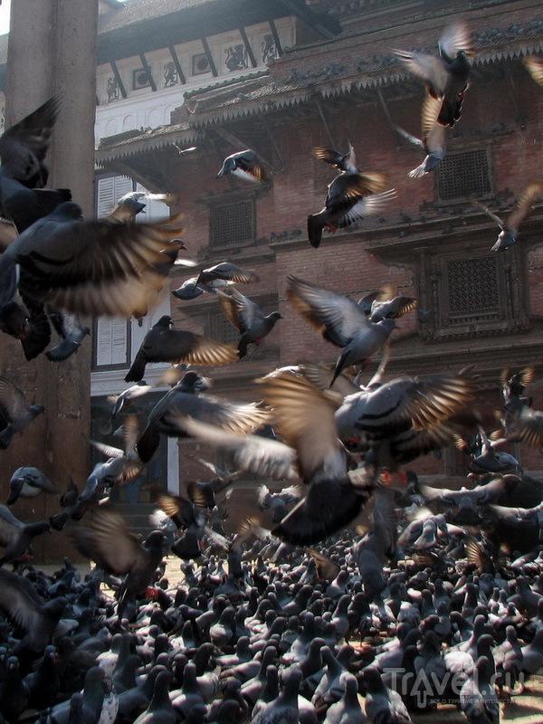 На центральной площади Катманду / Фото из Непала