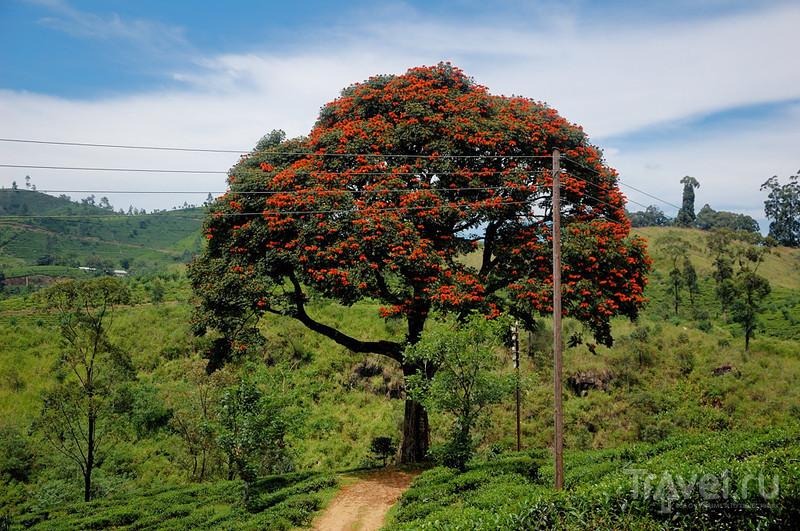 На поезде за цейлонским чаем / Шри-Ланка