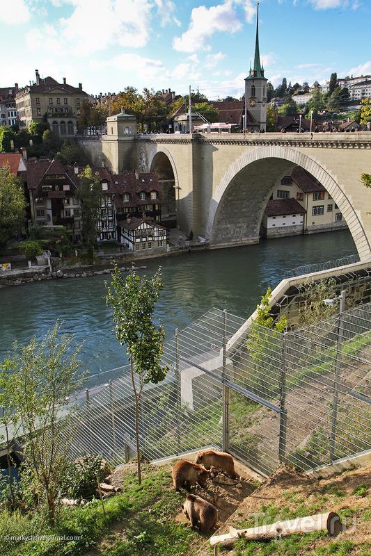 """""""Медвежья яма"""" в Берне / Фото из Швейцарии"""