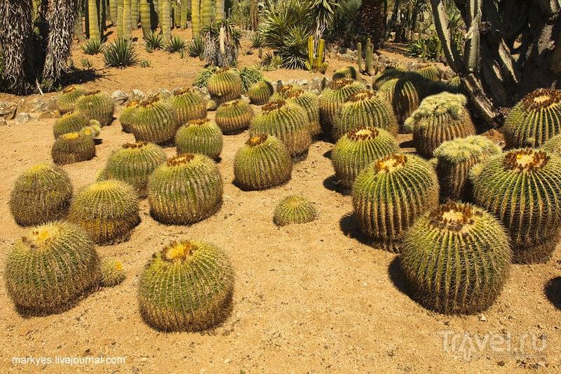 Индейская фига или любовь к кактусам / Фото из Испании