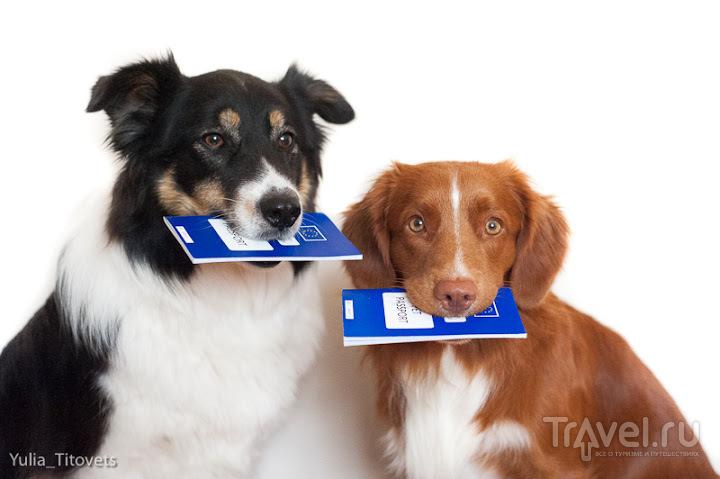 Перевоз собаки в/из ЮК / Великобритания