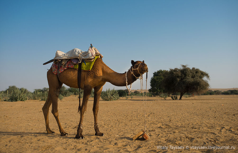 Золотой город на краю пустыни - Джайсалмер / Фото из Индии
