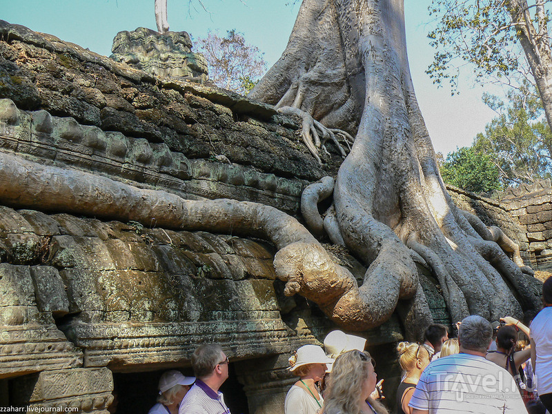 Деревья - пожиратели камней, храм Та Пром и Лара Крофт / Камбоджа