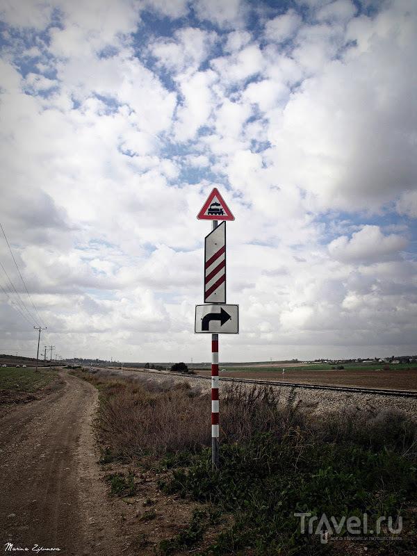 Дряквы возле Таль Шахар / Израиль