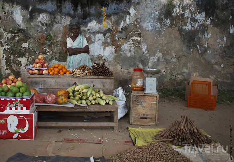 Шри-Ланка индуистская. Джафна / Шри-Ланка