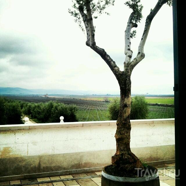 Искусство пития... или виноградная Апулия / Италия