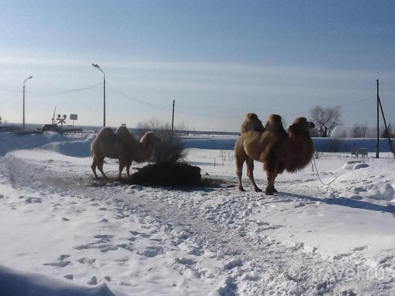 Вторая зимняя заполярная мотоэкспедиция. Весне - дорогу! / Россия