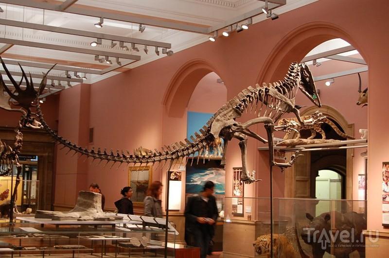 Художественная галерея и музей Келвингроув / Фото из Великобритании