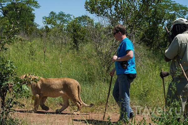 Записки моего рюкзака-путешественника: приключения в Зимбабве / Зимбабве