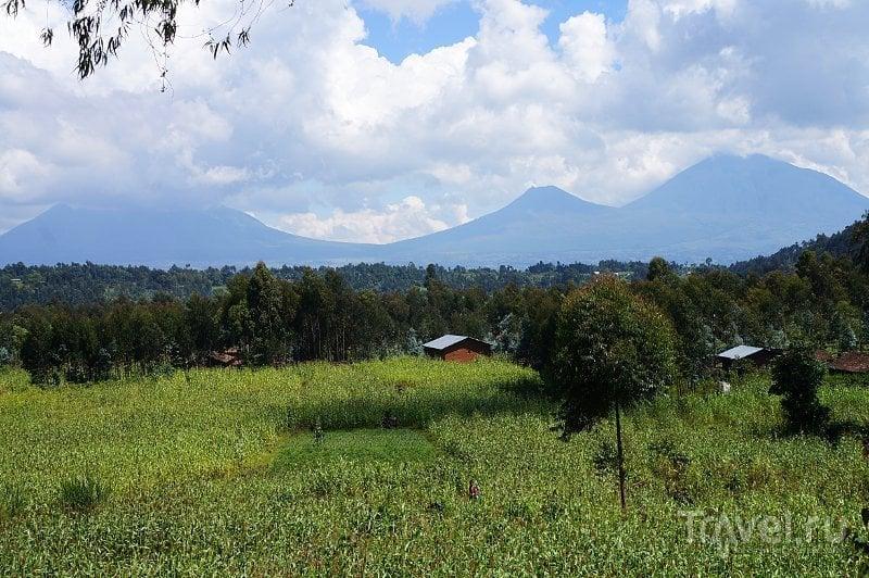 Горы Гахинга и Мухабура, Руанда / Фото из Руанды