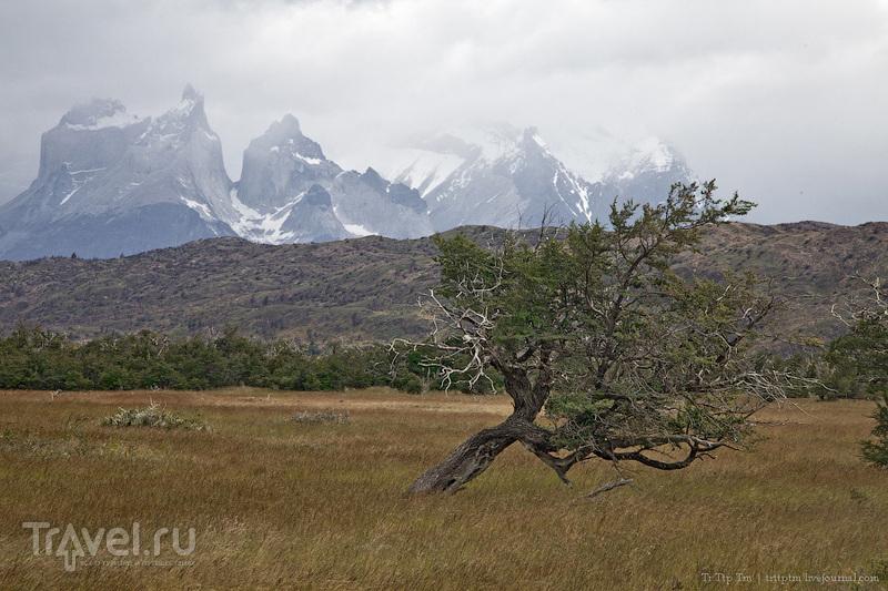 Массив Куэрнос дель Пайне, Чили / Фото из Чили