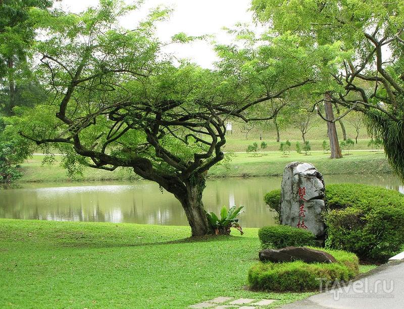 Китайский сад в Сингапуре / Фото из Сингапура