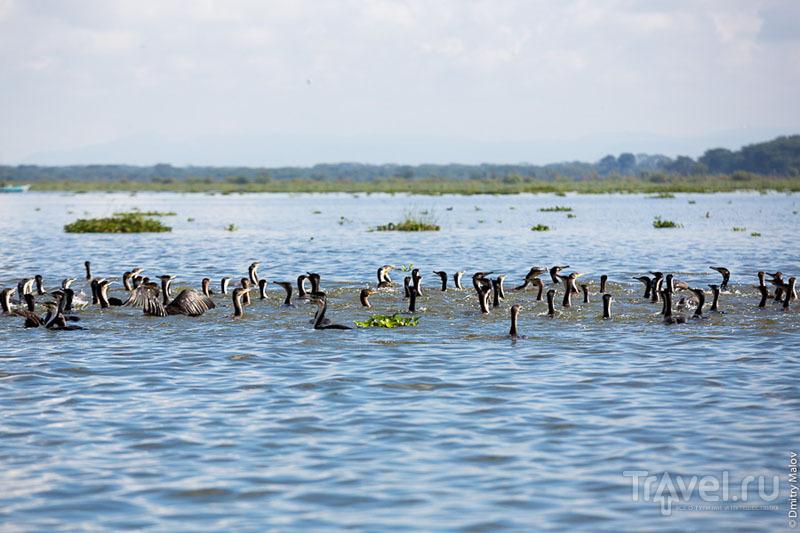 Озеро Наиваша, Кения / Фото из Кении