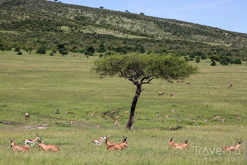 Кения с разных точек зрения / Фото из Кении