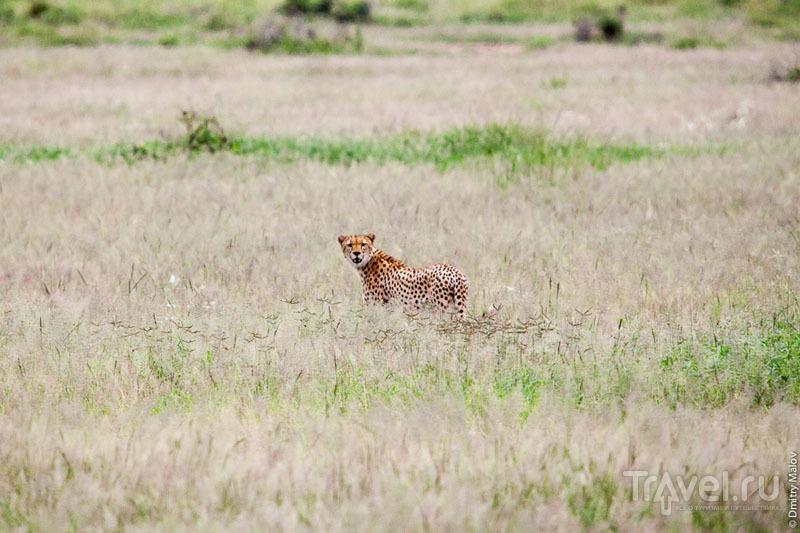 Национальный парк Амбосели / Фото из Кении