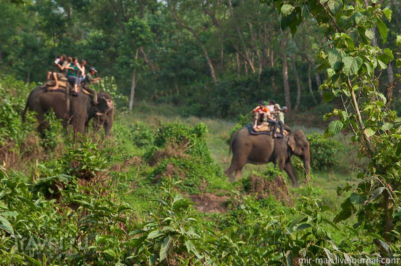 Читван. В поисках носорога / Непал