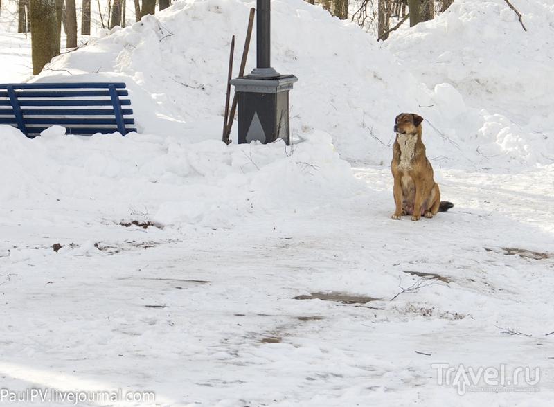 Поездка выходного дня: Кострома и дорога / Фото из России