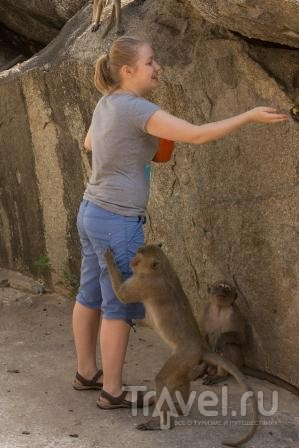 В стране летучих обезьян... / Таиланд