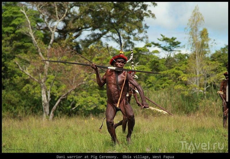 Свиная церемония у племени дани / Фото из Папуа-Новой Гвинеи