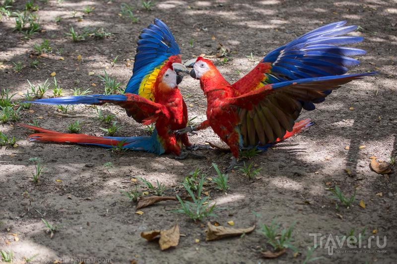 El Manantial - питомник красных Ара / Коста-Рика