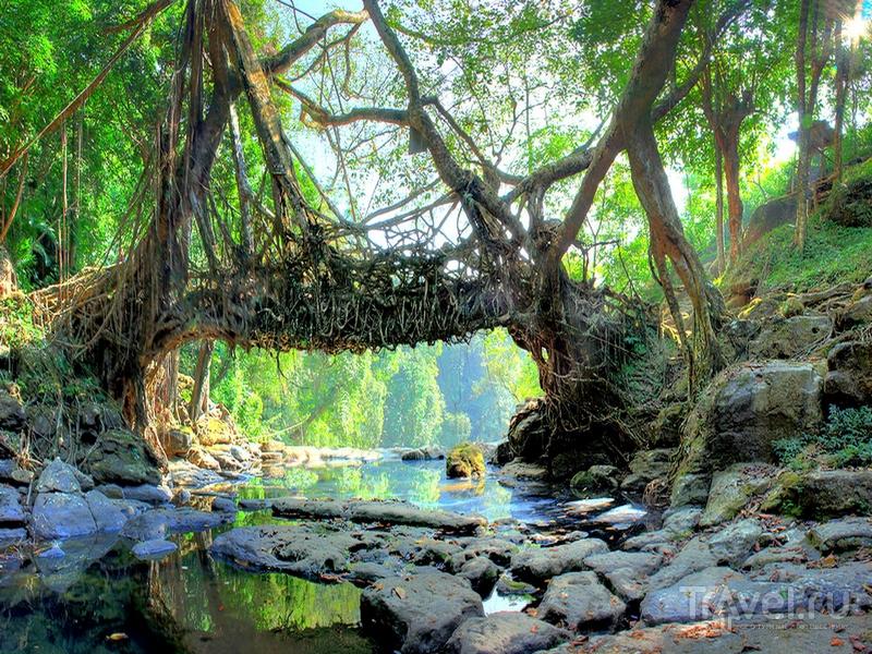 Living Root - самый известный и посещаемый туристами подвесной мост округа Восточные Кхаси, Индия / Индия