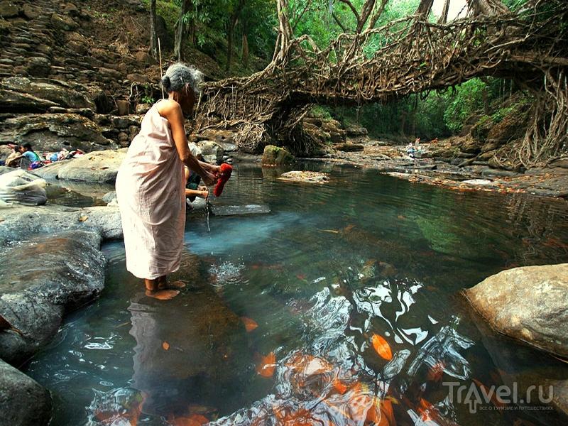 Местные жители выращивают природные переправы через реки и горные ручьи в течение нескольких сот лет, Индия / Индия