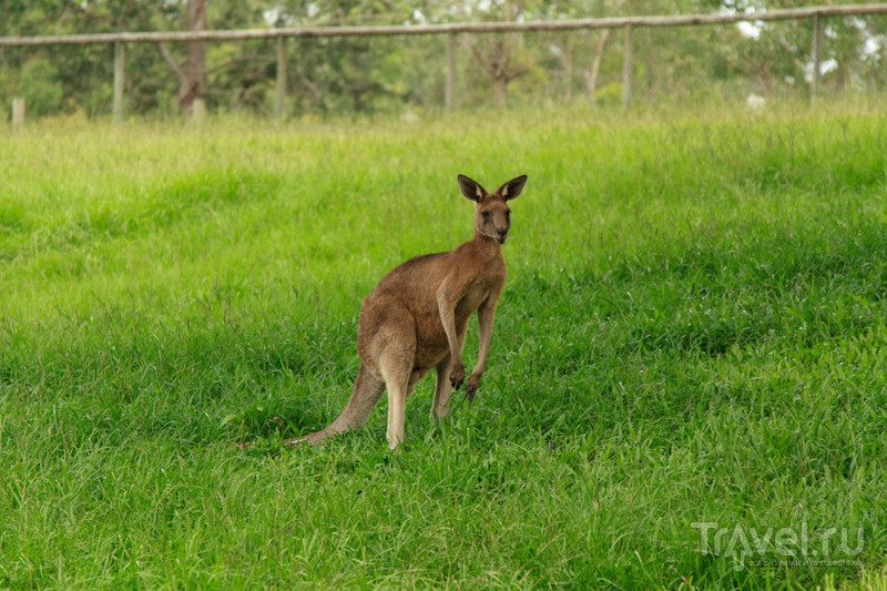Австралия: мечты, ожидания, отдых / Австралия