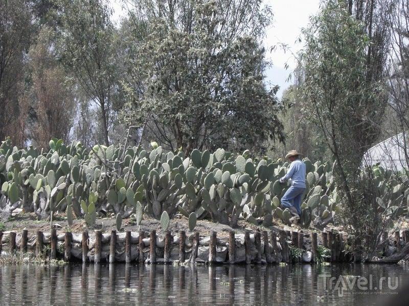 Сочимилько - мексиканское Вилково / Мексика