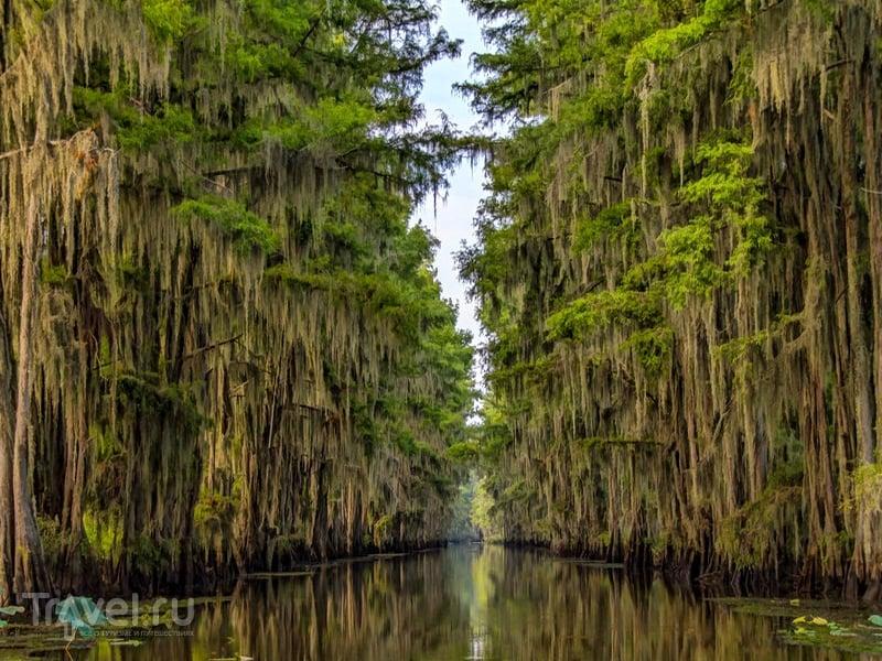 Величественные кипарисы озера Каддо в США / США